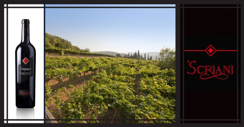 AZIENDA AGRICOLA I SCRIANI - Promozione vendita online vino Italiano Carpanè  Valpolicella